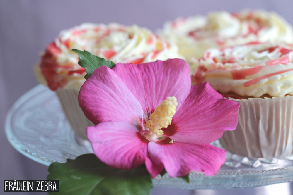 CheesecakeCupcakes6
